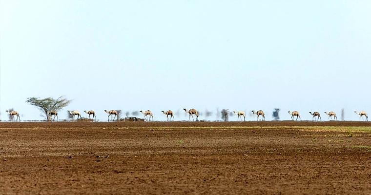 Пустыня Чалби, Кения