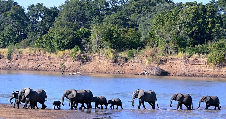 Семья слонов, Замбия