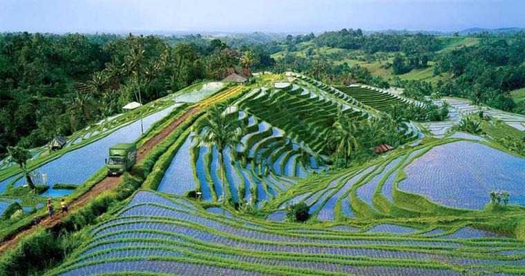 Рисовые поля, Индонезия