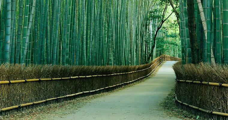 Киото, Япония. Бамбуковый сад