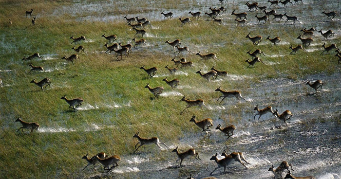 Природа, Ботсвана