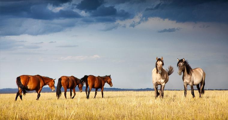 Лошади, Казахстан