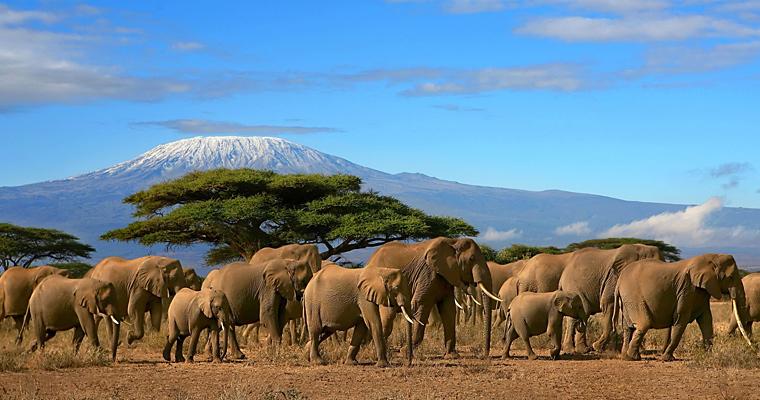 Гора Килиманджаро, Кения