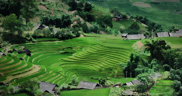 Рисовые поля, Вьетнам