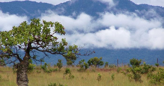 Горы Kunuku, Гайана