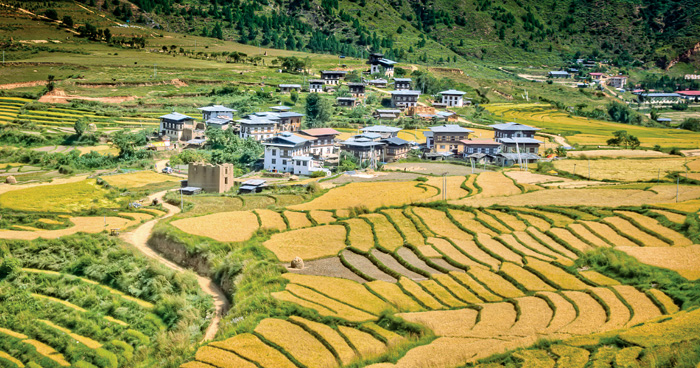 Рисовые террасы, Долина Пунакха, Бутан