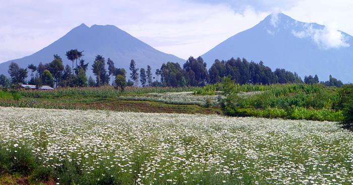 Гисеньи, Руанда
