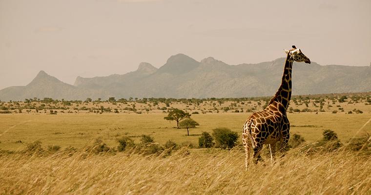 Долина Кидепо, Национальный парк, Уганда