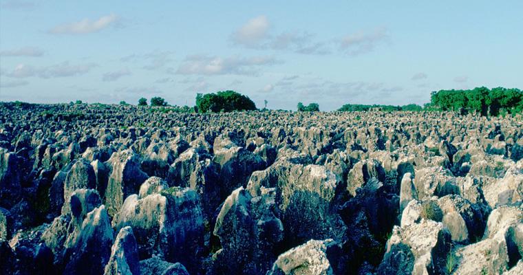 Коралловая пустыня, Науру