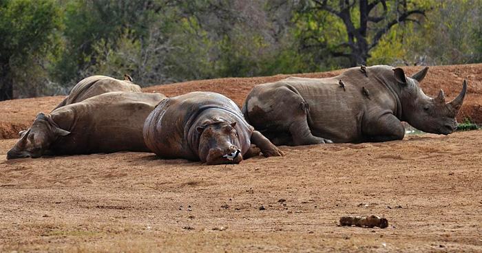 Королевский национальный парк, Свазиленд