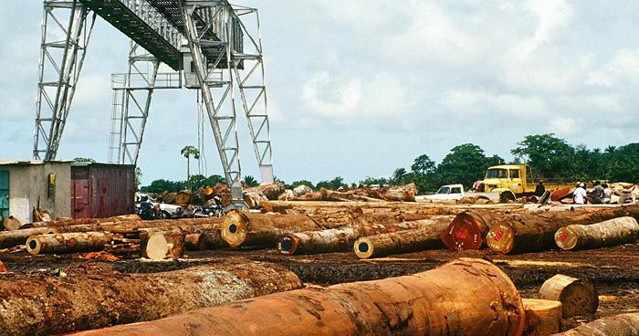 Лесозаготовительный комплекс, Кот-д'Ивуар