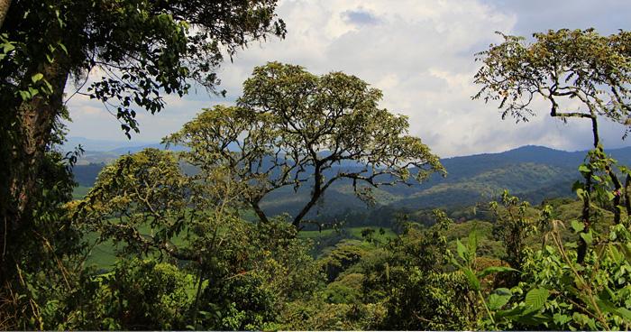 Национальный парк Kibira в Бурунди