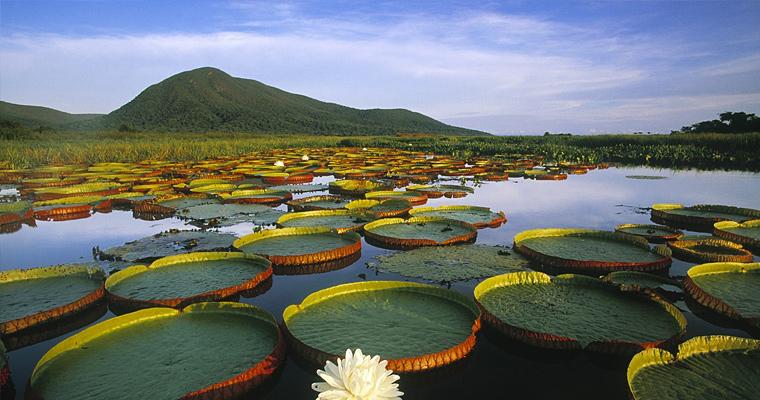 Pantanal Matogrossense Национальный парк