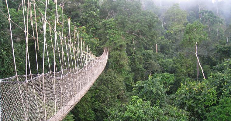 Нигерийский Национальный парк Kakum