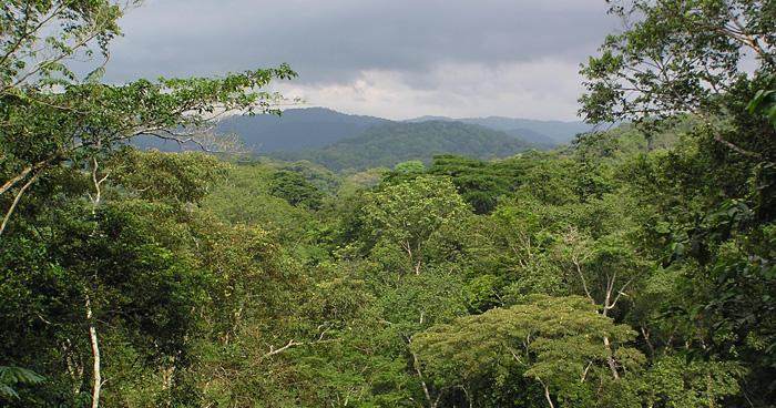 Леса в Экваториальной Гвинеи
