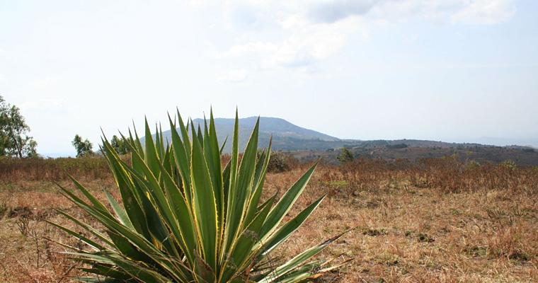 Природа Малави