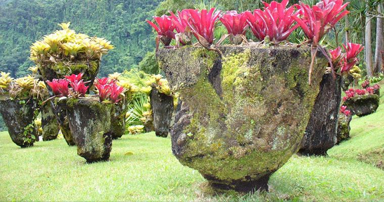 Природа, Мартиника