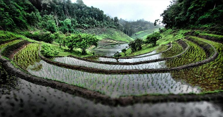 Рисовые поля и террасы в горах на севере Таиланда