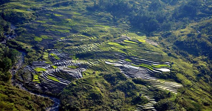 Рисовые поля в Дили, Восточный Тимор