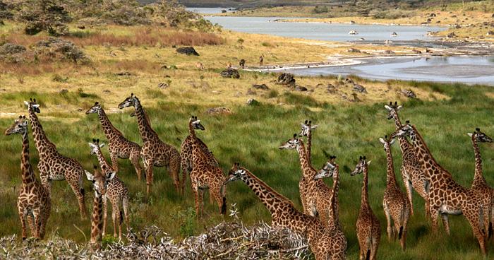 Национальный парк Аруша, Танзания