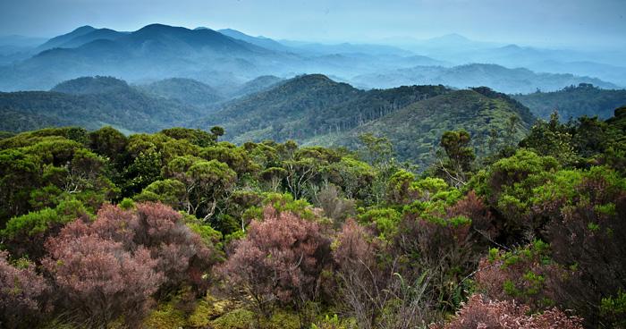 Национальный парк Nyungwe, Руанда
