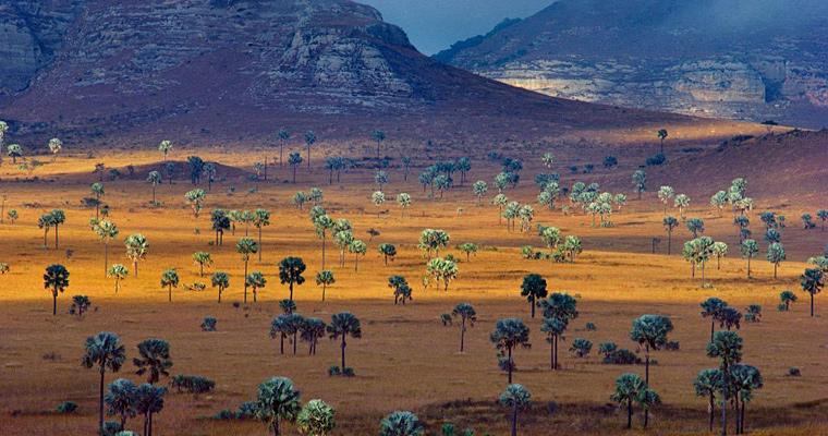Саванна, Мадагаскар