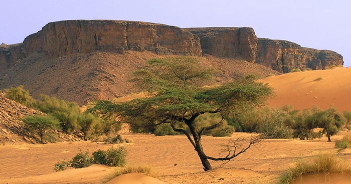 Природа Мавритании